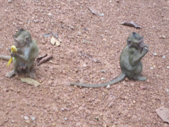 I kinda want a baby monkey!