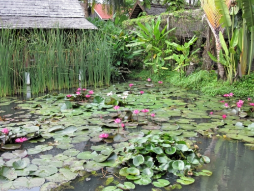 One of the lotus ponds at the Maison Dalabua