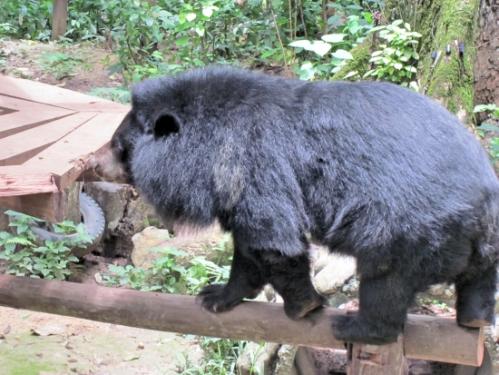 My next pet? A moon bear!