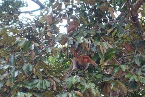 Some monkeys hiding in trees.