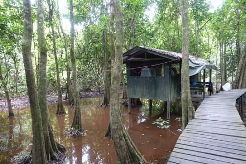 Wooden walkway to cabins.