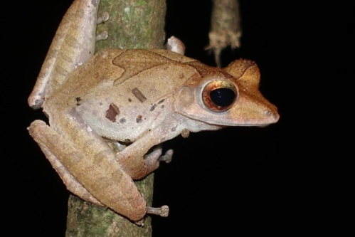 Froggie spotting.