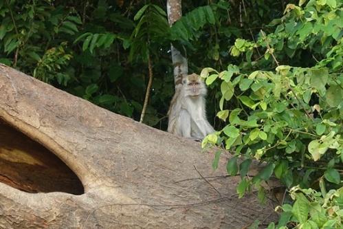 Final monkey sightings.